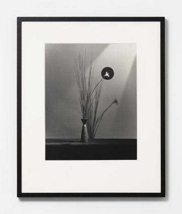 Robert Mapplethorpe Flower, 1983 Silver Gelatin Print 50.8 x 40.6 cm, 20 x 16 ins, paper size 73.3 x 60.1 cm, 28 7/8 x 23 5/8 ins, framed Edition 9/10 + 2APs