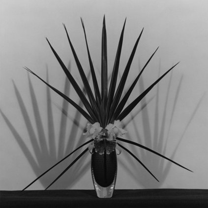 Robert Mapplethorpe  Orchid / Palmetto Leaf, 1982  Silver gelatin print  Framed: 40.7 x 50.8 cms / 16 x 20 ins Unframed: 60 x 70 cms / 23.6 x 27.6 ins  Edition 9/10  Stamped and signed by the Robert Mapplethorpe Estate