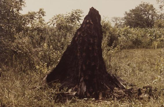 Ana Mendieta Silueta Series (Tree of Life Series), 1978 Colour photograph 33.7 x 50.8 cm, 13 1/4 x 20 ins 45.7 x 62.9 cm, 18 x 24 3/4 ins, framed Lifetime