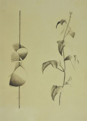 Robert Adams, Drawing of curved forms with a tendril of ivy, opus 113, 1960