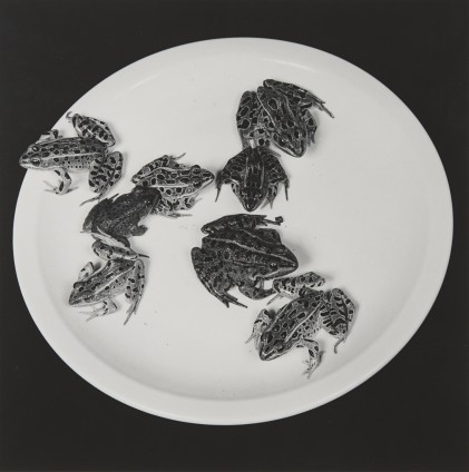 Robert Mapplethorpe Frogs, 1984 Silver Gelatin Print 50.8 x 40.6 cm, 20 x 16 ins paper size 73.3 x 60.1 cm, 28 7/8 x 23 5/8 framed Edition 4/10