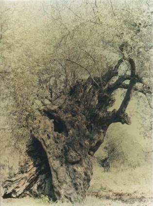 Ori Gersht, Ghost, Olive 17, 2004