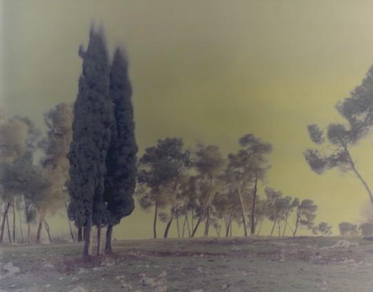 Ori Gersht, Cypresses, Mark 4, 2005