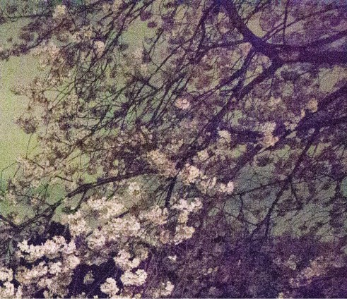 Ori Gersht, Chasing Good Fortune, Tokyo Imperial Memories, Speck 03, 2010