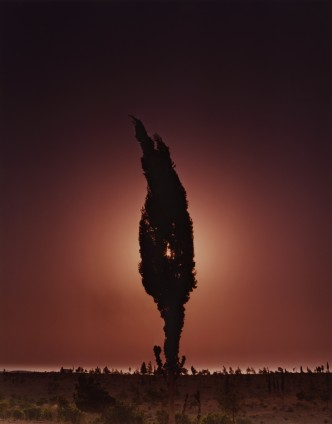 Ori Gersht, Cypresses, Mark 6, 2005