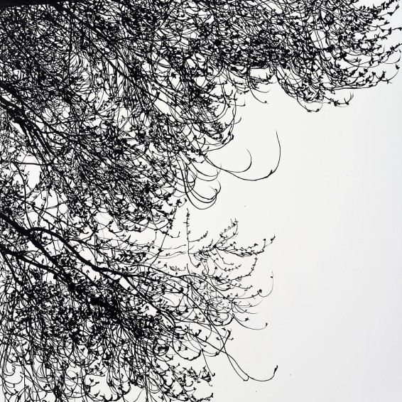 feather-clouds-cry-2015.jpg