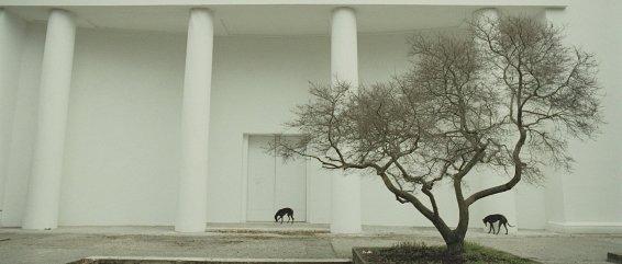 Giardini, 2009