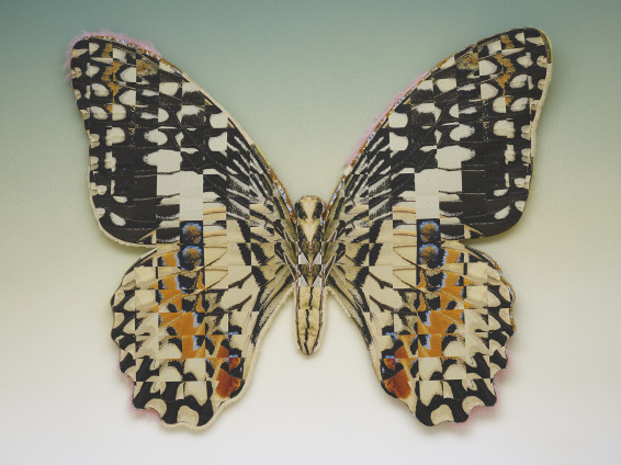 Transposed Lime Butterfly, 2019