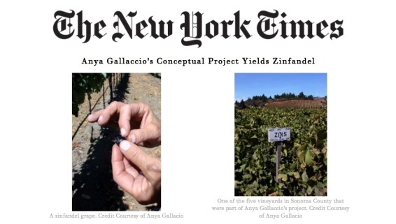 Anya Gallaccio's Conceptual Project Yields Zinfandel