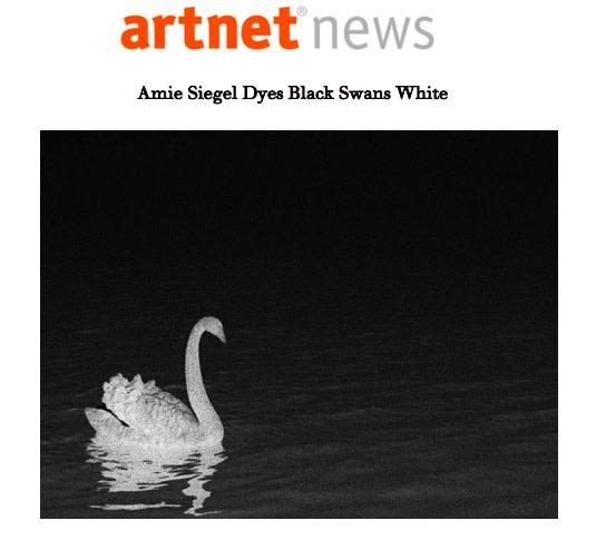 Amie Siegel Dyes Black Swans White