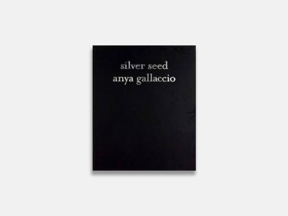 Anya Gallaccio: Silver Seed