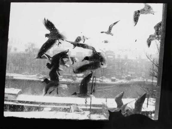 Prinsengracht, Amsterdam, 1958