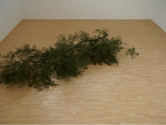 Fake Pine Branch on Fake Pine Floor, 2012