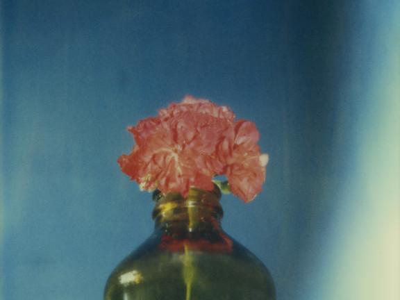 Rode bloem in fles, 1985