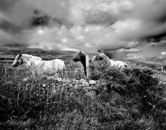 Ponies of Inishowen