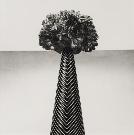 Robert Mapplethorpe, Carnations, 1984