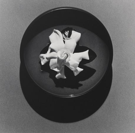 Robert Mapplethorpe, Gardenia, 1978
