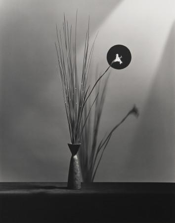 Robert Mapplethorpe, Flower, 1983