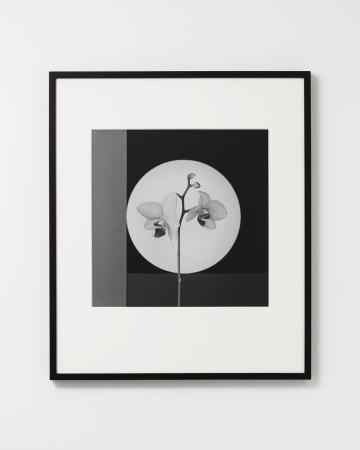 Robert Mapplethorpe, Orchid, 1988