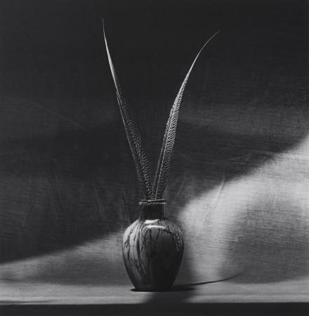 Robert Mapplethorpe, Feathers, 1985
