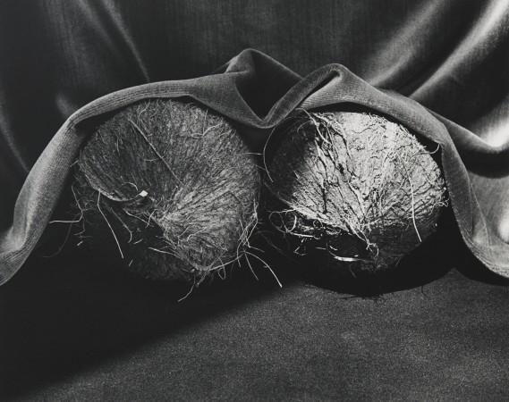 Robert Mapplethorpe, Coconuts, 1985