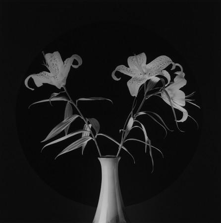 Robert Mapplethorpe, Lilies, 1984