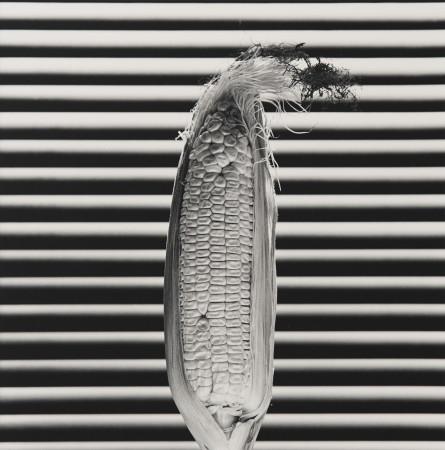 Robert Mapplethorpe, Corn, 1985