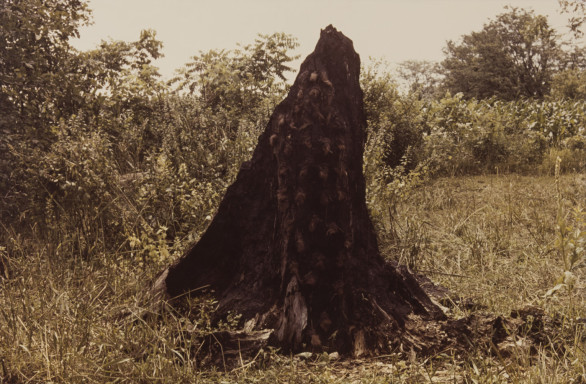Ana Mendieta, Silueta Series (Tree of Life Series), 1978