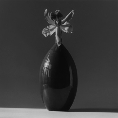 Robert Mapplethorpe, Orchid, 1985