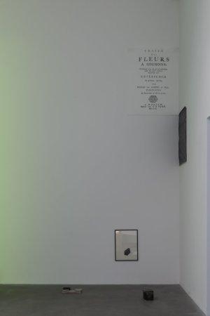 Black tulip, traité des ognions, 2012