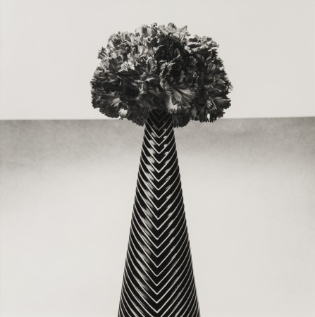 Robert Mapplethorpe, Carnations, 1984