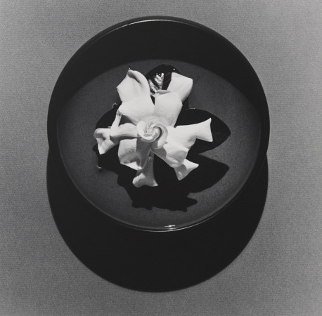 Robert Mapplethorpe, Gardenia, 1978