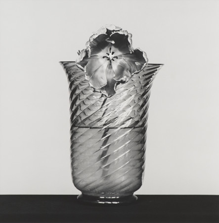 Robert Mapplethorpe, Tulip, 1982