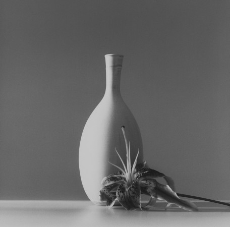 Robert Mapplethorpe, Flower, 1985