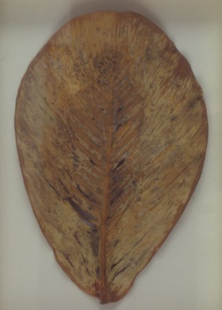 <span class=%22title%22>Untitled (Leaf drawing)<span class=%22title_comma%22>, </span></span><span class=%22year%22>1982</span>