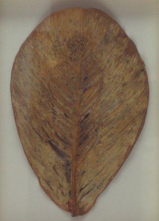 Untitled (Leaf drawing), 1982