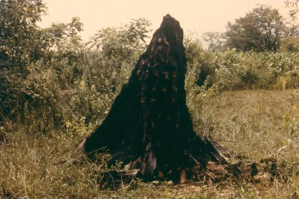 Untitled (Silueta Series), 1978