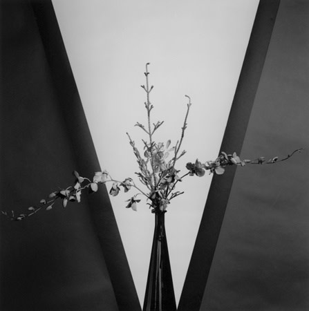 Robert Mapplethorpe, Flower, 1981