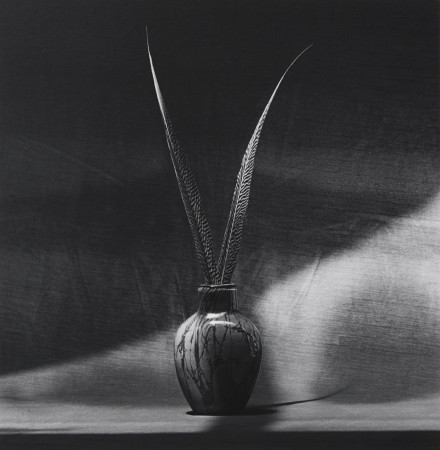 Robert Mapplethorpe, Feathers, 1985