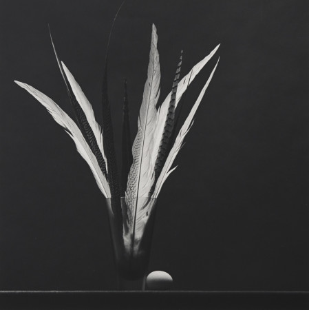 Robert Mapplethorpe, Feathers and Egg, 1985