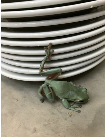 Juergen Teller, Frogs and Plates No.12, London 2016, 2017