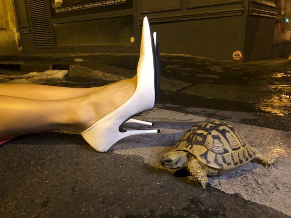 Juergen Teller, White shoes and tortoise, Paris, 2018