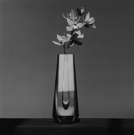 Robert Mapplethorpe, Orchid, 1982