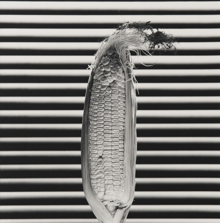 Robert Mapplethorpe, Corn, 1985