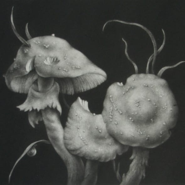 Konstantin Chmutin RE - Fly Agarics
