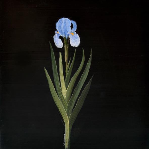 Carol Mothner, Blue Iris