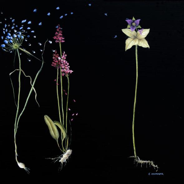 Carol Mothner, Chimera Botanica