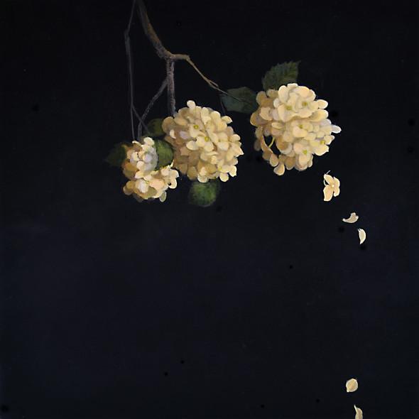 Carol Mothner, White Hydrangeas
