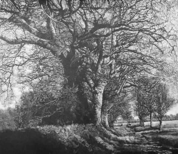Winter Oak Walk