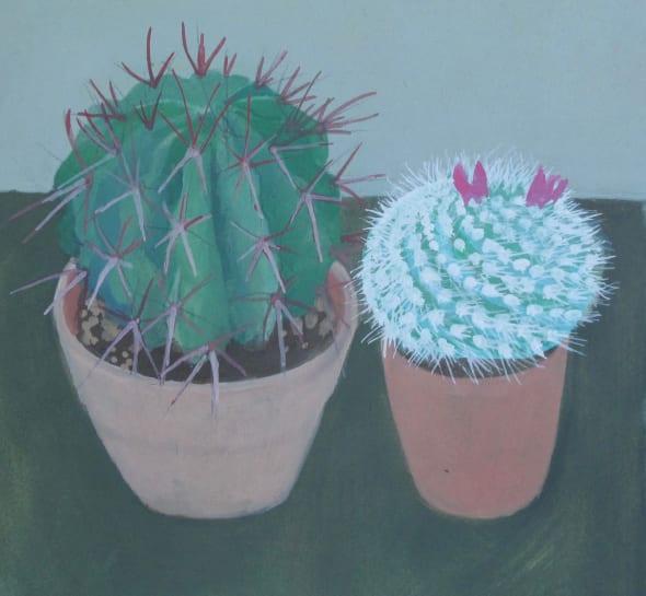 Mr Bowles Cacti
